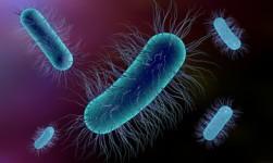 Nanopartículas pueden eliminar bacterias con mayor eficiencia