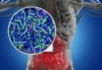 Manipular la microbiota ayudaría a prevenir las enfermedades cardiovasculares
