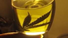 Resolución 156/2019. Protocolo de ensayo clínico para evaluar la efectividad, seguridad y tolerabilidad del Cannabis como adyuvantes en pacientes adolescentes y adultos con epilepsia refractaria