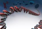 BigH1, la proteína esencial para la fertilidad masculina