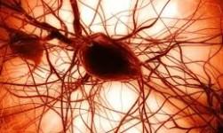 Un fármaco en experimentación acelera regeneración de los nervios tras lesión traumática