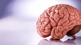 Crean una aguja ultrafina para introducir fármacos en el cerebro