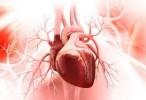 Descubren el mecanismo clave de una proteína esencial para la función del corazón