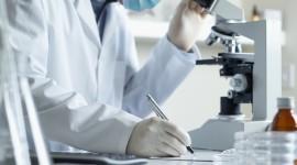 Diseñan un tratamiento reutilizable contra el cáncer que se activa con un compuesto de las ortigas