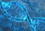 Completan el genoma del parásito que causa la forma mortal de leishmaniasis