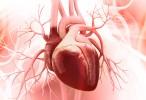 Hallan la forma de promover la regeneración del tejido del corazón en adultos