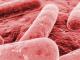 Antibióticos: identificada la base molecular de las bacterias resistentes