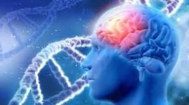 Identifican 500 genes que influyen en el cociente intelectual
