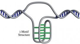 Investigadores identifican una nueva forma de ADN en las células