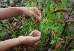 Brasil va a mapear su biodiversidad para buscar nuevos fármacos