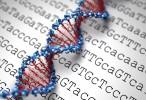 Cómo funciona el genoma de la leucemia