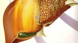 Nuevas pistas para el tratamiento de la enfermedad hepática