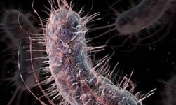 """El tipo de sangre afecta a la gravedad de la diarrea causada por """"E. coli"""""""