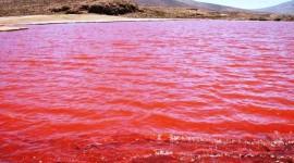 Un hongo del Mar Rojo podría servir para crear nuevos antiepilépticos