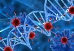 Cómo secuestran los virus parte del sistema inmunológico y lo utilizan contra el organismo