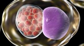 Investigación argentina: Descubren el mecanismo que usa una bacteria clave para provocar infertilidad