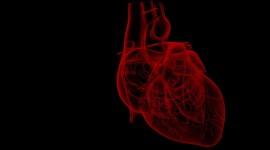 Un dispositivo permite administrar fármacos directamente en el corazón dañado