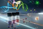 Un nuevo material permite detectar rápidamente las infecciones provocadas por 'Candida albicans'