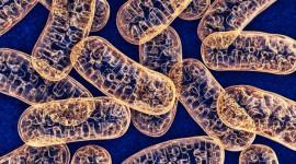 El ADN mitocondrial inicia la respuesta del sistema inmune