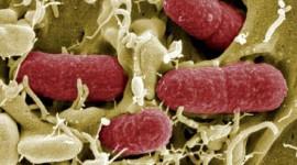 """La """"armadura"""" bacteriana podría ser un nuevo objetivo para futuros antibióticos"""