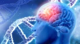 Proteínas extraviadas causan trastornos genéticos