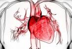 Identificados nuevos mecanismos de estrés oxidativo vascular