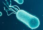 Dirigirse a una molécula bacteriana clave podría reducir la necesidad de antibióticos en infecciones del tracto urinario