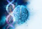 Evolución humana: Las capacidades cognitivas se desarrollan durante la fase embrionaria y la infancia