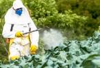 El herbicida paraquat combinado con lectinas puede producir parkinsonismo