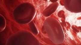 Células de la sangre para ayudar a la detección temprana del Mal de Alzheimer