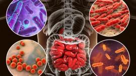 Descubren casi 2.000 bacterias desconocidas en el intestino humano