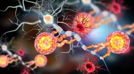 Neuronas dañadas convertidas en nuevas: el secreto está en las células gliales