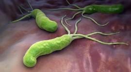 Encuentran un fármaco que actúa contra la bacteria helicobacter pylori