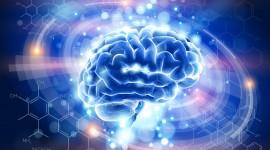 Las células inmunitarias producen químicos en el cerebro para combatir las infecciones