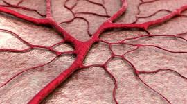 Crean vasos sanguíneos 'in vitro' para recuperar corazones infartados