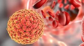 Una nueva herramienta de vigilancia de enfermedades ayuda a detectar cualquier virus