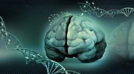 Alzheimer: por primera vez secuencian el genoma de casi 1000 argentinos