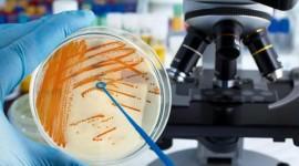 Identifican un objetivo potencial para una vacuna contra el estreptococo