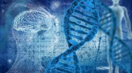Nuevas claves sobre los 'interruptores' del genoma