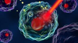 Nanopartículas de oro permitirían la administración directa de fármacos a los linfocitos B