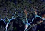 Hallan un órgano desconocido bajo la piel que transmite al cerebro la percepción de dolor