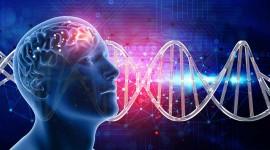 Los trastornos de ansiedad provocarían cambios en el metabolismo de la energía celular