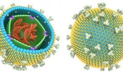 Por qué algunas cepas del virus de la mononucleosis causan cáncer