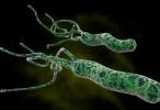 La FDA aprueba el primer tratamiento para H. pylori a base de rifabutina