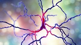 Un medicamento en experimentación disminuye los movimientos involuntarios del Parkinson