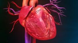 Descubren un nuevo metabolito relacionado con enfermedades cardiovasculares