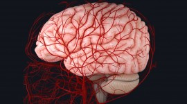 El COVID-19 puede dañar los vasos sanguíneos del cerebro