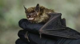 En China descubrieron en murciélagos cuatro nuevos coronavirus y virus relacionados con capacidad de propagarse
