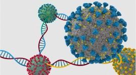 La OMS y los CDC establecen los niveles de amenaza para las variantes de COVID-19